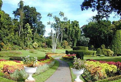 Шри Ланка.  Королевский ботанический сад