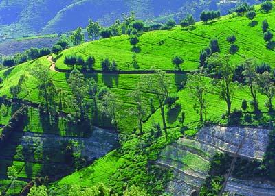 Шри Ланка. Дорога в Унаватуна