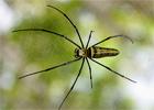 Опасные насекомые Шри-Ланки