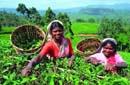 Информация о Шри-Ланке