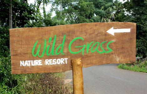 Wild Grass Resort